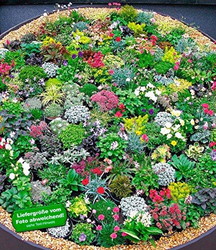 BALDUR GartenSteingarten Stauden Mix 10 Pflanzen Winterhart
